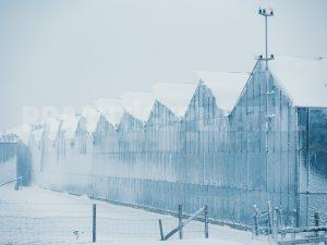 sneeuw in het westland