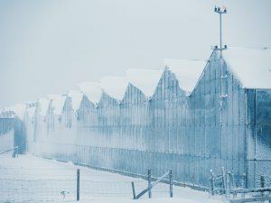 Sneeuw in het westland plexiglas canvas