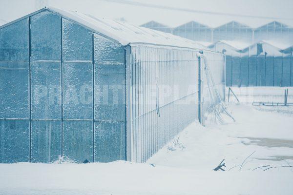 Sneeuw in het westland 2