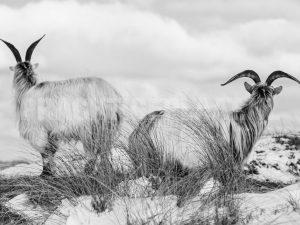 Wildlife Zwart & Wit 2