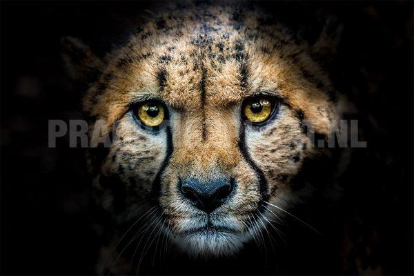 Cheeta black 2