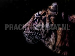 tijger black