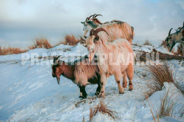 Wildlife in de sneeuw 5