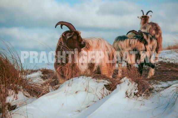 Wildlife in de sneeuw 6