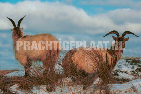 Wildlife In De Sneeuw 3