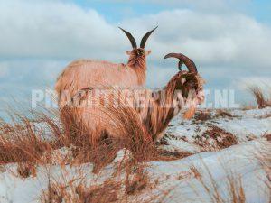 Wildlife In De Sneeuw 4